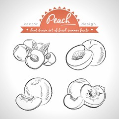 Peach Collection of fresh fruits, whole, half and bitten with leaf. Vector illustration. Isolated
