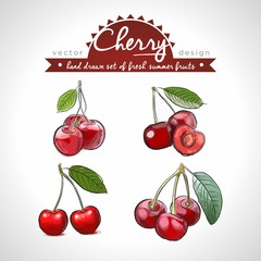 Cherry Set of fresh fruits, whole, half and bitten with leaf. Vector illustration. Isolated