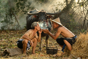 Asia smoking time of farmer and friend with buffalo in farm  relaxing after out of work