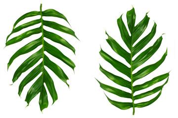 Palm leaf on white background