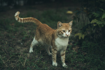 Orange and White Cat in the Garden