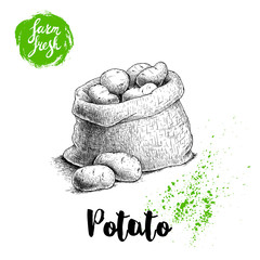 Hand drawn sketch style illustration of ripe potatoes in burlap bag. Farm fresh vector illustration poster.