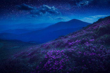 Mountain hill covered with purple flowers