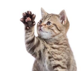 Funny cat portrait raising paw isolated