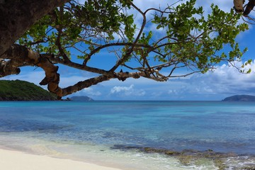 Hawksnest sandy beach with tree on St. John, USVI, US Virgin Islands, Caribbean