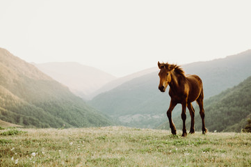 Horse in a field grazing in a field, mountains in background.