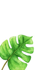 Tropical Green monstera leaf with space for text, Tropical plant. Hand painted watercolor.