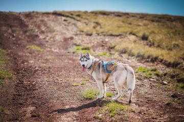 the dog runs around the mountains