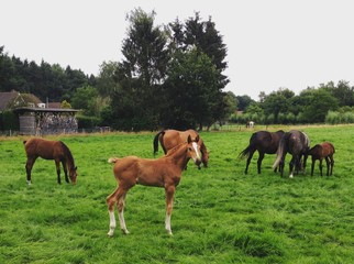 Foal and horses