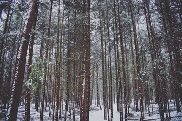 Forest in winter snow