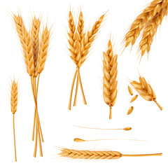 Bunch of wheat ears, dried whole grains realistic vector illustration set isolated on white background. Cereals harvest, agriculture, organic farming, healthy food symbol. Bakery design element