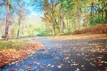 road in fallpark with golden leaves at sunny day, retro toned