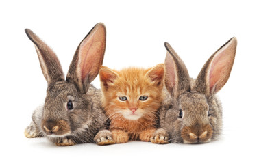 Red kitten and bunnies.