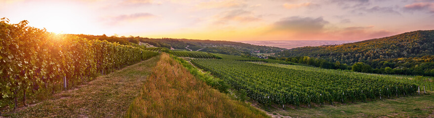 Vineyard in a beautiful sunrise