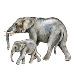 African elephant with a child. A family. Isolated on white background. Watercolor. Illustration
