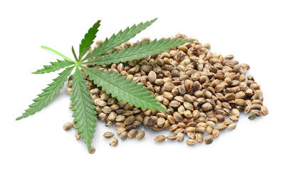 Heap of hemp seeds on white background