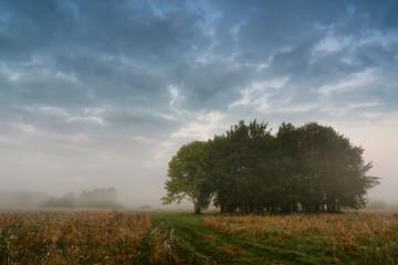 Autumn misty scene on a meadow with oak trees.