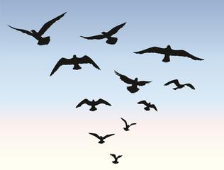 Bird flock flying over blue sky background. Animal wildlife