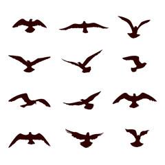 Bird flying silhouette set. Wildlife icon collection