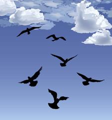 Flock of bird flying Blue sky background. Animal wildlife