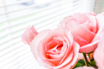 Bouquet of light bright pink roses macro closeup with blinds on window and sunlight