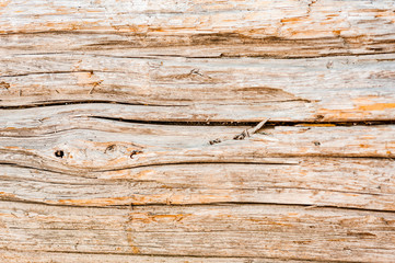 Abstract background texture of beach driftwood