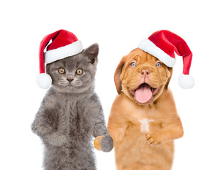 Funny puppy and kitten in red christmas hats. isolated on white background