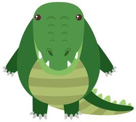 Crocodile with round body