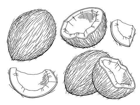Coconut graphic black white isolated sketch illustration vector