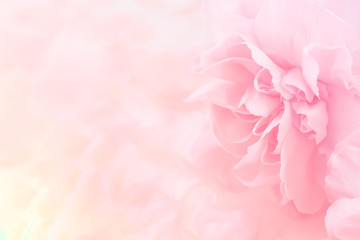 Poster Bloemen Pink Carnation Flowers Bouquet. soft filter.