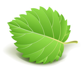 Green leaf with small stem isolated cartoon illustration