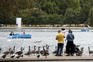 Canadian geese and pigeons gather around people at the side of The Serpentine lake in Hyde Park in London