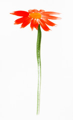 red gerbera flower hand painted on white paper