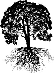 silhouette of large lush tree with black root