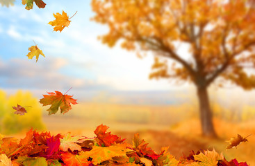 Aluminium Prints Autumn Beautiful landscape with yellow trees,green grass and sun. Colorful foliage in the park. Falling leaves natural background .