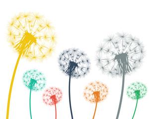 Multi-colored dandelions on a white background