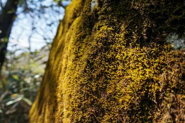 光を浴びる岩と苔