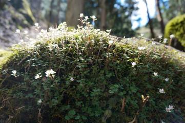 森の小さな花
