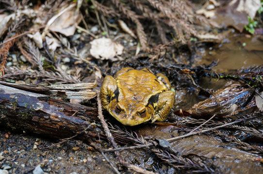 カエルと木の葉