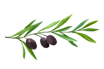 Watercolor dark olive branch