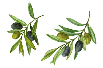 Two olive branch