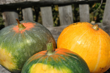 Colorful bright pumpkins on a background of a wooden fence, autumn harvest