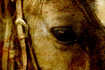 Close Up of a brown horse eye. Sepia effect.
