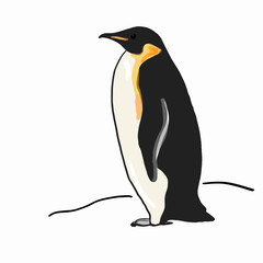 realistic penguin