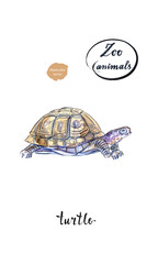 Land turtle (tortoise) in watercolor