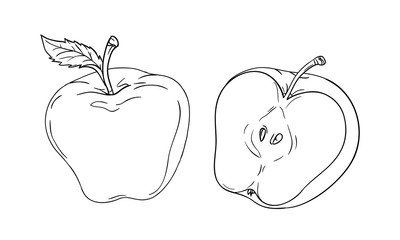 Vector drawing or coloring sheet with apple cut in half isolated on white background