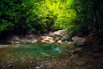 Amazing forest landscape.