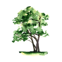 A stylized tree hand-painted with watercolor on white background