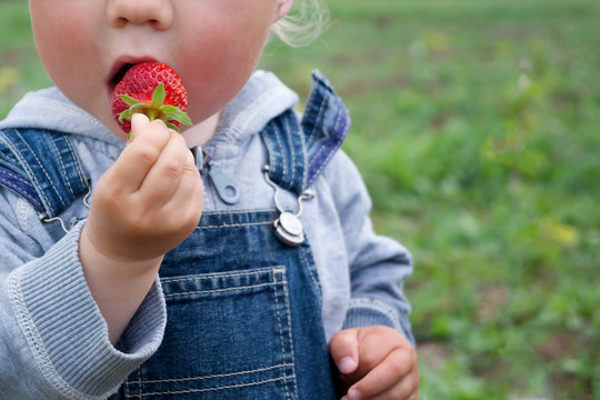 Child in denim overalls eats strawberry on a sunny day