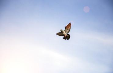 pegion flying on clear sky